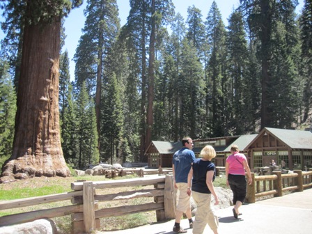 at Sequoia Nationalpark